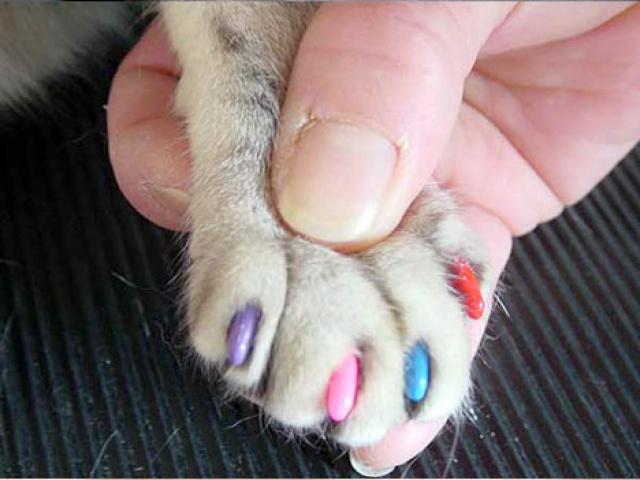 Все о кошках сколько ногтей