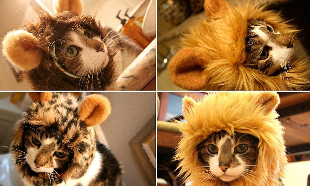 предложения фото кота в шапке льва это препарат нового